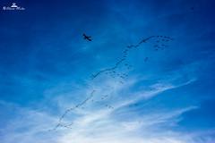 stalking the plane :D (89lilly) Tags: sardegna blue sky clouds canon fly nuvole sardinia colours blu flamingo flamingos volo cielo aereo cagliari golfo citt stormo volare fenicotteri golfodicagliari canon550d