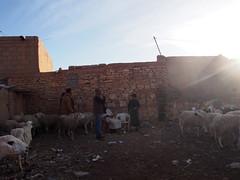 P4162037 (t_y_l) Tags: morocco marokko tinghir suq 2016 tinerhir