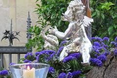 Angel (Julin Iglesias) Tags: flores angel naranjo