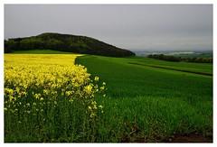 20160430-162554 (lichtschattenjaeger) Tags: yellow landscape gold diesel bio eifel gelb raps biodiesel vulkan getreide gerste weizen benzin hafer biosprit