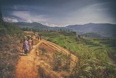 Poondi. (Prabhu B Doss) Tags: life india landscape nikon women village rice terrace sigma fields worker farmer 1020 hamlet tamilnadu cultivation hillstation terraced d80 prabhubdoss