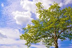 Frhlingsgefhle (Mariandl48) Tags: austria wolken steiermark jungebltter wenigzell frhlingstimmung wolkenschfchen sommetsgut