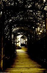 Au parc... (sabinelacombe) Tags: ombre paca arbres provence parc bouchesdurhone ombreetlumire berreletang parcmaurin