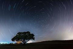 Circumpolar encina solitaria (RamnP) Tags: nightphotography stars noche cielo estrellas nocturna polar fotografia jan holmoak encina circumpolar starstrails nikon1635f4 nikond750