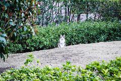 Today's Cat@2016-04-09 (masatsu) Tags: cat pentax cc100 catspotting mx1 thebiggestgroupwithonlycats