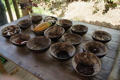 Natural Flavors (jbilnoski) Tags: bali nature coffee indonesia island beans sample gods ubud sanur kopi civet luwak luwakkopi
