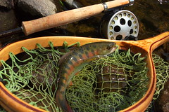 YAMAME DSC_2053 () Tags: fly fishing flyfishing yamame