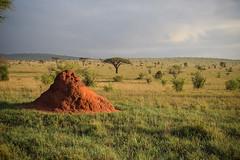 Safari, Termite Mound (robseye76) Tags: africa park holiday kenya safari national mound vacations kenia termite tsavo termitemound wakacje afryka