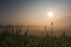 golden morning (jan.scho) Tags: nebel wiese himmel wolken sonne grser wetterau sonnen