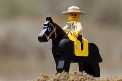 Lego Ranger (Jon Christall) Tags: horse canada macro toy spring ranger bc lego britishcolumbia police vancouverisland minifig rider blackhorse mountedpolice parkranger horseman 2016 legominifig zeballos