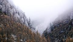 The Details (FlavioSarescia) Tags: travel winter sun mountain snow mountains tree nature fog forest landscape schweiz switzerland spring suisse walk sony foggy hike wanderlust zermatt wander fogg