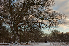 Tree and hikers (Jakob Arnholtz) Tags: light landscape natuer arnholtz