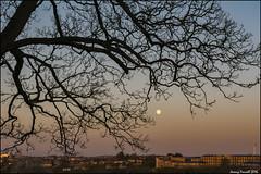 While the city sleeps (zolaczakl ( 2 million views, thanks everyone)) Tags: uk england southwest tree bristol earlymorning fullmoon april 2016 earlymorninglight ashleydown nikond7100 photographybyjeremyfennell sigma1835mmf18dchsmlens