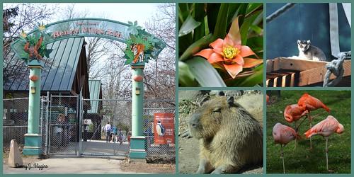 Henry Vilas Zoo, Madison, Wisconsin.