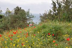 DSC_3485 (giuseppe.cat75) Tags: flowers sea italy landscape mare liguria levanto