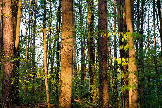 Hoosier National Forest - Terrill Ridge Trail - April 23, 2016