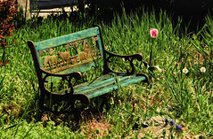 Have a seat! (Sky_PA (Catching up slowly- On/Off)) Tags: park wood flowers lebanon plants flower green art texture nature colors beautiful grass leaves animals canon bench painting season relax outdoors leaf spring colorful outdoor quote peaceful carving pa tulip vegetation inspiredbylove amateurphotography unioncanaltunnelpark sx50 topazsimplify
