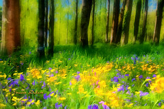 Impressions of a Spring day (Edward Dullard Photography. Kilkenny, Ireland.) Tags: wood flowers kilkenny ireland painterly art nature yellow bluebells forest landscape spring impressionism photoart buttercups edwarddullardphotography oldpicturesofkilkenny
