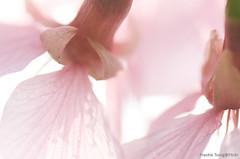 DSC_8678 (Frankie Tseng ()) Tags: park pink flowers sunset sky bw flower silhouette photography 50mm blackwhite nikon outdoor flash sunny tokina cherryblossoms fade nikkor 70300mm tamron 90mm f8 1224mm f28 f4 1870mm bwphotography blackwhitephotography portraitphotography outdoorportrait sb900 yongnuo outdoorportraitphotography yn568