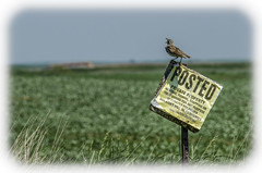 Trespassing? Ha ha! (Doug.Mall) Tags: camera unitedstates location northdakota americas mockingbird trespassing enchantedhighway dougmall nikond5100