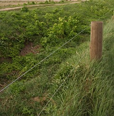 Fence In Green, Cley (NJKent) Tags: uk fence norfolk saveearth norfolkwildlifetrust cleynaturereserve fencefriday