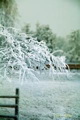 frozen (guenter_holo) Tags: schnee landscape austria frozen outdoor wand landschaft hohe n