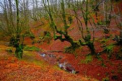 _DSC3513 (andoni.guridi) Tags: winter españa spain enero bosque invierno euskadi oñati gipuzkoa basoa 2016 hayedo negua urtarrila araotz degurixa