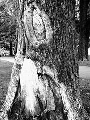 L'esquimau (Pierre Éthier) Tags: trees sculpture art nature femme yeux paysage arbre parc visage esquimau supershot figuratif treesubject top30green