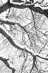 Winter Foliage (Grant is a Grant) Tags: ca winter bw white snow canada black tree monochrome novascotia ns branches snowstorm january kitlens wolfville 1855 nikkor1855mm nikond90 vsco vscofilm