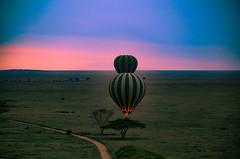 Balloonflicht over the Serengeti (olafgroeneweg) Tags: africa morning sky sun holiday nature beautiful beauty grass animal sunrise landscape tanzania nationalpark amazing nikon view wildlife natuur safari wildanimal afrika grassland bigfive