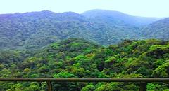 Serra do Mar (José Argemiro) Tags: rainforest estrada serra floresta mata devastation árvores deforestation rodovia serradomar devastação mataatlântica desmatamento rodoviadosimigrantes bioma florestaestacional densamata