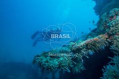 NE_Abrolhos0012 (Visit Brasil) Tags: horizontal brasil fauna natureza mergulho bahia esporte nordeste aventura externa abrolhos subaqutica comgente diurna