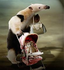 Childhood animal (jaci XIII) Tags: bear animal bag toy photo brinquedo cart bolsa carrinho anteater tamandu ursinho photobicho
