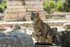Chat Agora antica (Lionel Le Jeune Artiste) Tags: animal cat feline chat greece gatto agora grece flin
