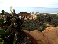 cactus at Torrey Pines (h willome) Tags: ocean california beach torreypines sandiego torreypinesstatereserve 2016