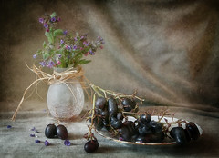 primrose and winter grapes (Button-NK) Tags: flowers stilllife berries grapes primrose