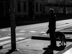 A walk with the dog (@iloveDannyBoy) Tags: winter people dog white black milan animal cane wow photography photo amazing cool strada foto shot good milano great uomo dannyboy inverno bianco nero daniele salutari ilovedannyboy