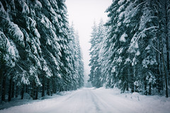 Winter is silent (helena678) Tags: road winter snow cold fog forest haze sweden january foggy hazy scandinavia firs firtrees