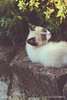 Stray Cat Resting Outside (Elisa Gabbrielleschi) Tags: hello primavera nikon copyspace randagio gatto bianco animali animale verticale libertà immagine giorno allaperto animaledomestico messaafuoco figuraintera lucesolare gattometiccio scenarurale effettoluminoso vistalaterale senzapersone primopianoafuoco immagineacolori nikond7100 scenanonurbana soltantounanimale helloelisagabriel verdicolore animalieglianimalidomestici