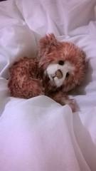 Wake Me When Winter is Over (zaramcaspurren) Tags: stuffedtoy plush plushies teddybear stuffedanimal stuffedanimals stuffedtoys teddies teddybears softtoy plushtoy softtoys plushtoys charliebears