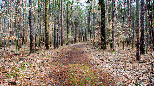 Charles C. Deam Wilderness - Terrill Ridge - March 11, 2016