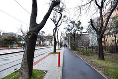 Vyrba p stromov je zbyton (Bratislavsky kraj) Tags: region bratislava enviro mesto stromy bsk upa zchrana bratislavskysamospravnykraj ilinsk zstavka vrub