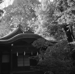 160214_ZenzaBronicaS2_007 (Matsui Hiroyuki) Tags: fujifilmneopan100acros zenzabronicas2 nikonnikkorp75mmf28 epsongtx8203200dpi