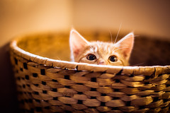 Catch me... (Steffen Walther) Tags: cat germany eyes kitten play basket bokeh redhead katze tier bokehlicious canon50l canon5dmarkii fotografjena steffenwalther