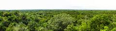 """Lamanai: vue sur la canopée depuis le Grand Temple <a style=""""margin-left:10px; font-size:0.8em;"""" href=""""http://www.flickr.com/photos/127723101@N04/25475729973/"""" target=""""_blank"""">@flickr</a>"""