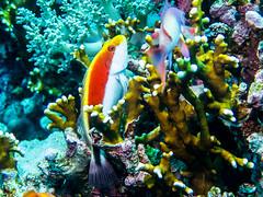 IMG_0351 (eye[4]eye) Tags: egypt diving gypten tauchen bluewaves