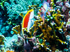 IMG_0351 (eye[4]eye) Tags: egypt diving ägypten tauchen bluewaves