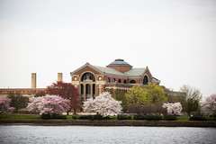 2016 03 26 - 1086 - DC - Cherry Blossoms (thisisbossi) Tags: flowers trees usa southwest washingtondc dc unitedstates rivers sakura sw cherryblossoms potomacriver floweringtrees hainspoint nationalwarcollege