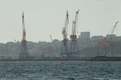Zef en rade de Brest_IMG_3762 (Hlne (HLB)) Tags: ocean city sea mer france water port vent brittany wind bretagne cranes brest windsurfing ocan rade grues planchevoile plougastel
