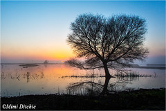 Bare Tree At Sunrise (Mimi Ditchie) Tags: tree sunrise pond merced getty baretree gettyimages mercednationalwildliferefuge mimiditchie mimiditchiephotography